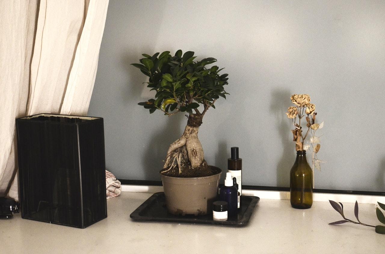 Books & Bonsai