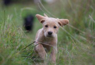 puppy-2642352_1920 - pixabay.com - Markstephendutton