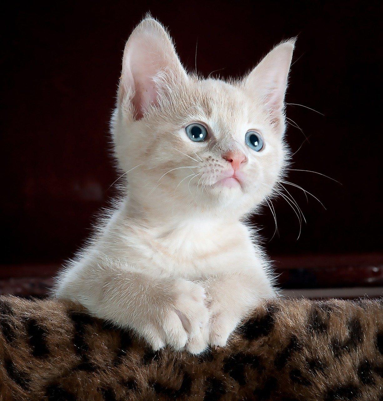 cat-551554_1280